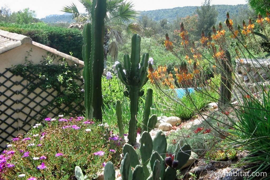 Imagen de un jardín que cuenta con piscina, flores, cactus y árboles con una villa de fondo.