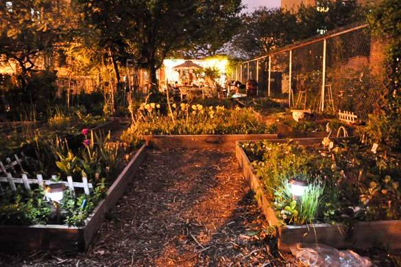 Imagen nocturna de tulipanes y otras plantas en el Morris-Jumel Community Garden