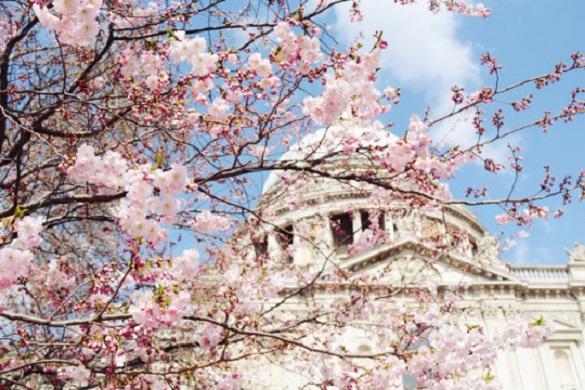 Imagen de flores de cerezo frente a un monumento