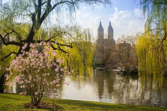 Imagen del lago en Central Park lleno de árboles con flores y sauces llorones.