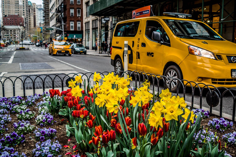 Imagen de un taxi de la ciudad de Nueva York al pasar junto a una colorida cama de flores primaverales.