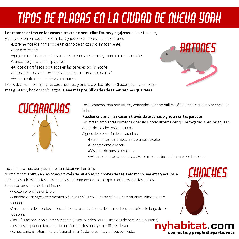 Infográfico de New York Habitat con información sobre cómo identificar ratones, cucarachas y chinches.