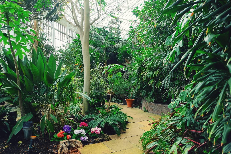 Imagen de una pasarela en el invernadero Barbican rodeada de plantas verdes.