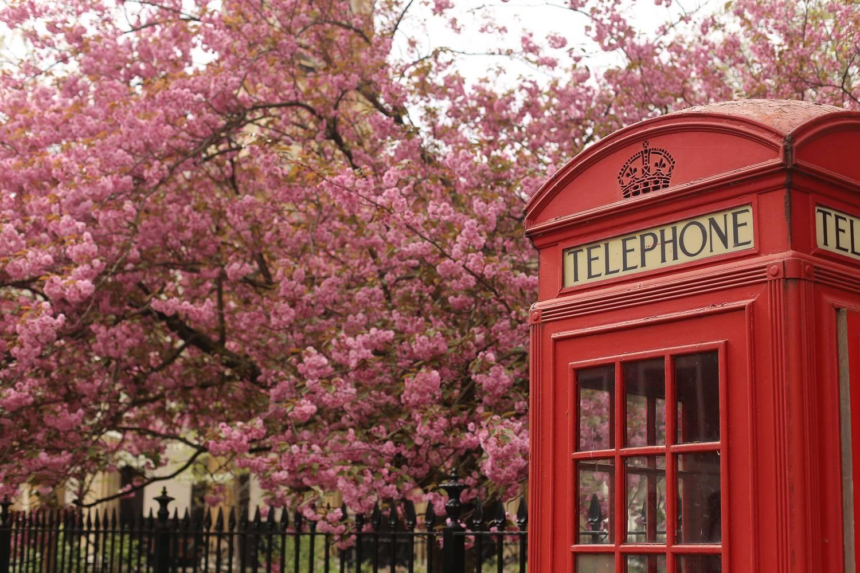 Imagen de una cabina telefónica roja de Londres con un cerezo en flor.